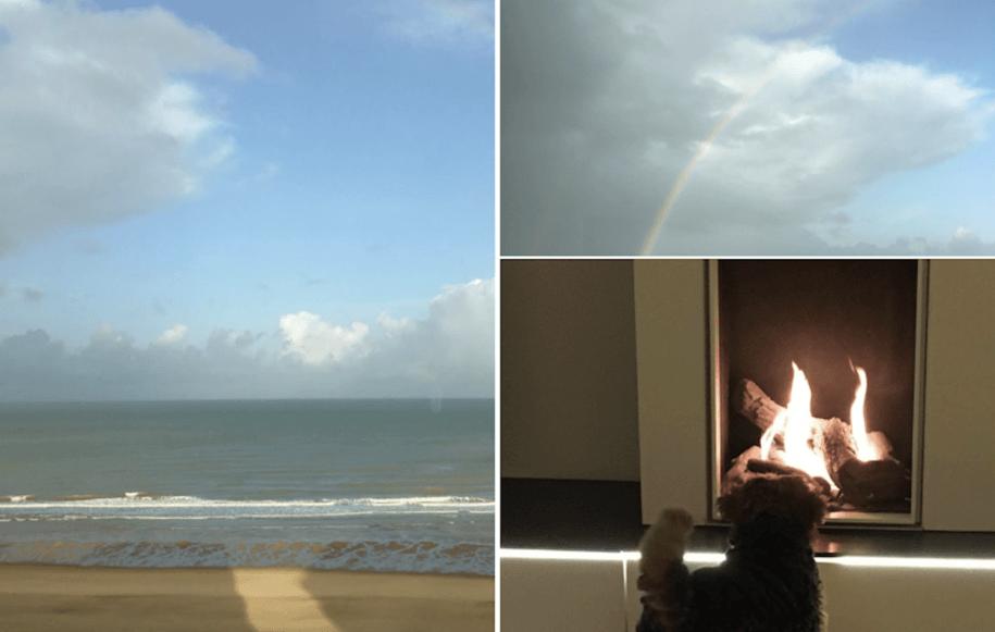 Hondje aan zee in het appartement
